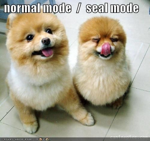 normal mode / seal mode - Glad to know we're not the only ones with a Pomeranian that looks like a seal sometimes. :)