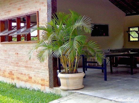 Areca Bambu Chrysalidocarpus Lutescens Com Imagens Palmeira