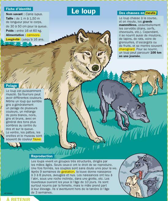 Fiche exposés : Le loup Plus