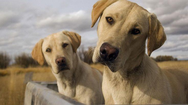 Avez-vous déjà regardé dans les yeux de votre chien et senti une connexion remarquablement forte, un peu comme si cette petite boule de poil était votre en