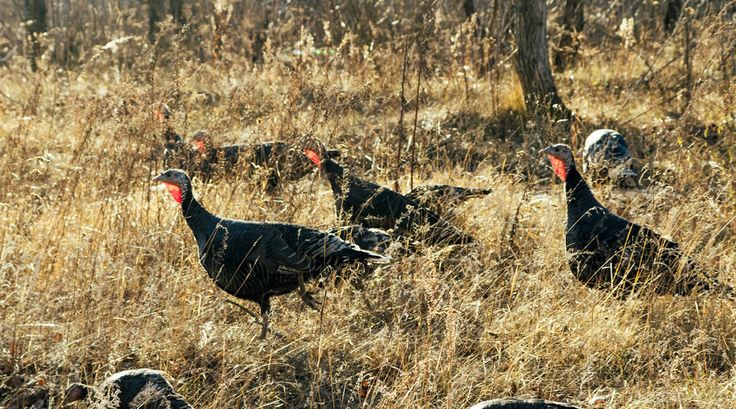 How Do You Assess the Wildlife on a Property You Are Considering? -LandThink.com #realestate #hunting #land #wildlife
