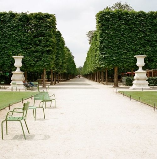 Clipped stilted hedges classical urns les tuileries for Paris tuileries
