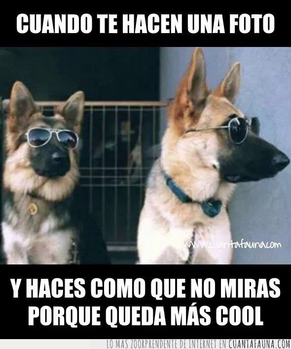 Memes De Pastor Aleman Buscar Con Google New Funny Memes Funny Dog Memes Very Funny Pictures