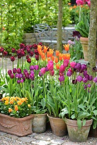 En smuk samling krukker med tulipaner i skønne farver.