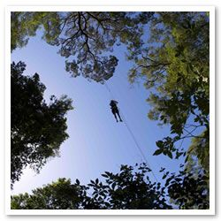 Canopy Tours in Tsitsikamma! Most fun i ever had!