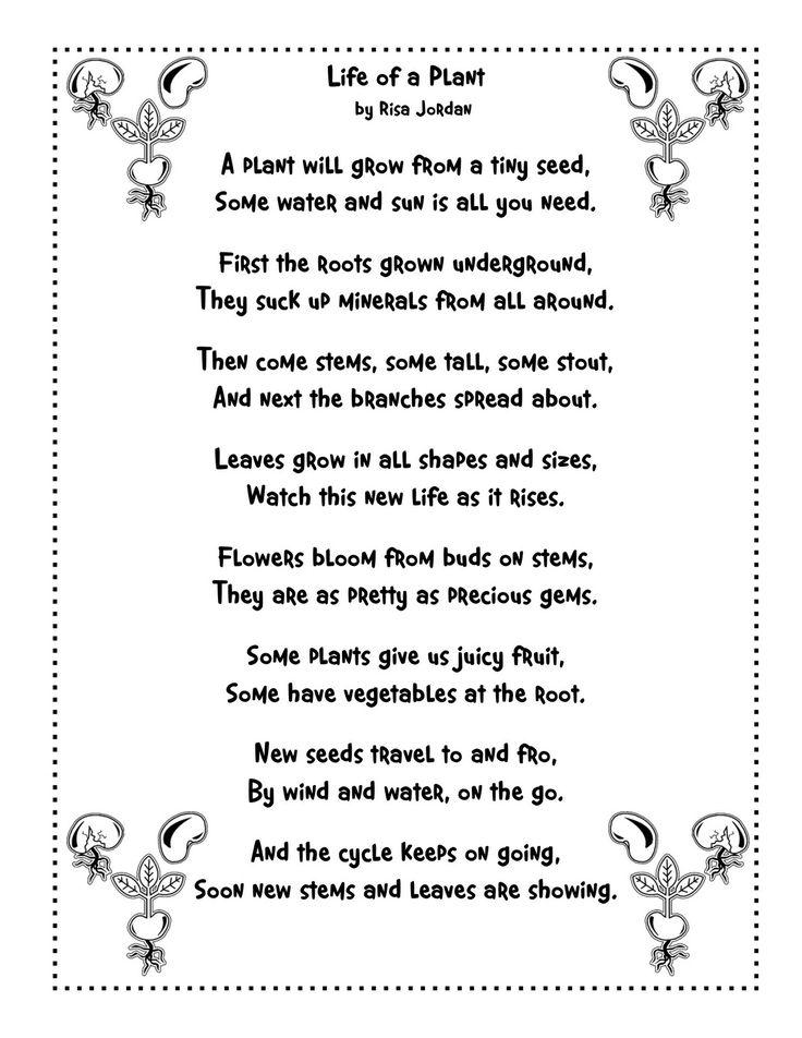 plant life cycle poem