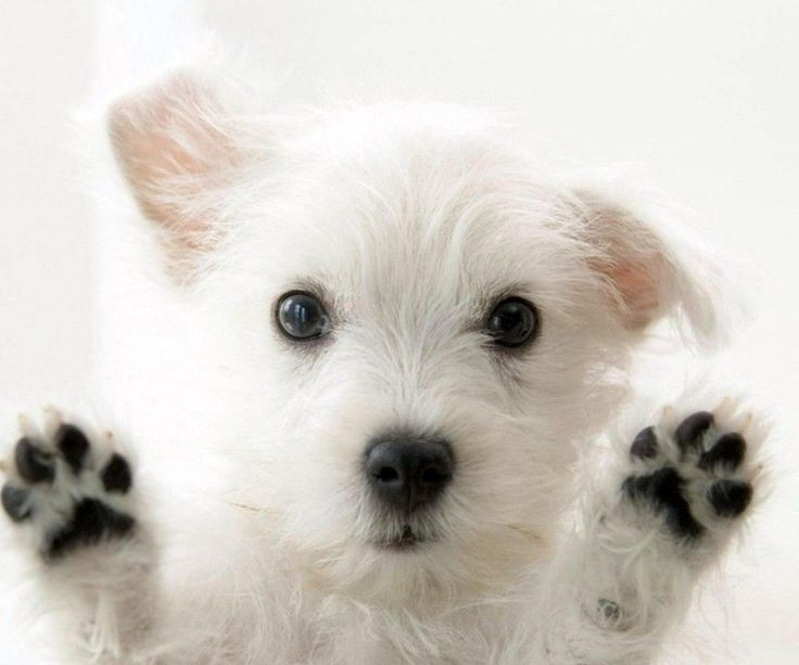Really Cute Dogs