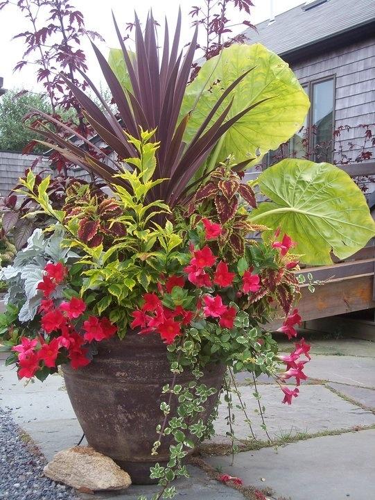 105 best garden tropical images on pinterest tropical for Garden design ideas northeast