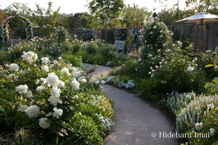 Yokohama English Garden 横浜イングリッシュガーデ gehört zu den schönsten Parks von Japan. Nicht nur im Weissen Rosengarten ist die Pflege-Perfektion sichtbar.