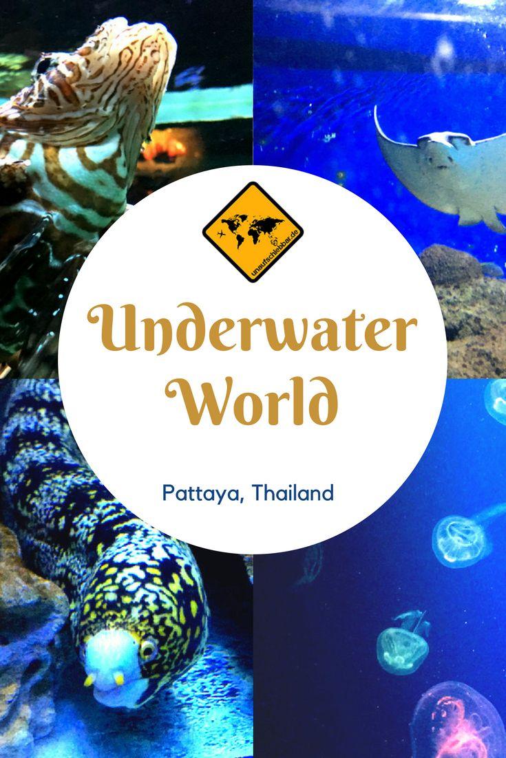 Die Underwater World Pattaya ist eine super Alternative, falls es in deinem Thailand Urlaub einmal regnen sollte. Auch für Kinder ist dieses Aquarium optimal geeignet. Erfahre mehr, in dem du aufs Bild klickst. #Thailand #Pattaya #Aquarium #Fische #Underwater #Underwaterworld