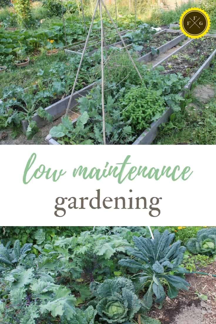 Low Maintenance Gardening For Busy People Family Food Garden Low Maintenance Garden Low Maintenance Plants Garden Planning