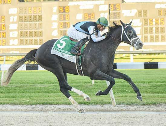 Tapwrit Outlasts Irish War Cry in Belmont | TDN | Thoroughbred Daily News | Horse Racing News, Results and Video | Thoroughbred Breeding and Auctions
