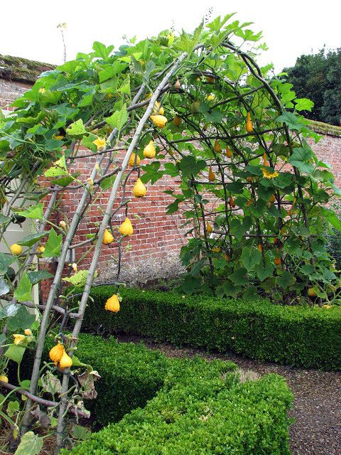 gourd arch at entrance to walled kitchen garden