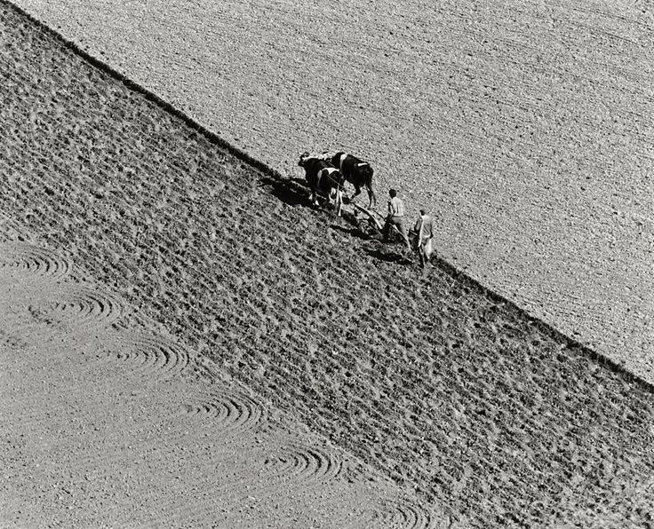 Toni Schneiders, Portugal, beim Pflügen (Portugal, plowing the fields), 1968    Vintage ferrotyped gelatin silver print