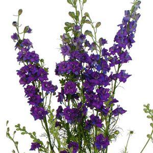 My Wedding June 28 2017 Pinterest Purple Flowers And Delphinium