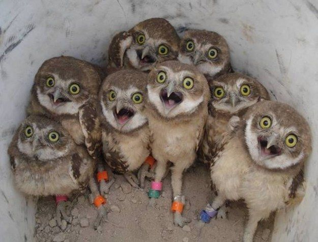 You and your squad when a hottie walks into the bar. | 24 Owls That Are 100% You