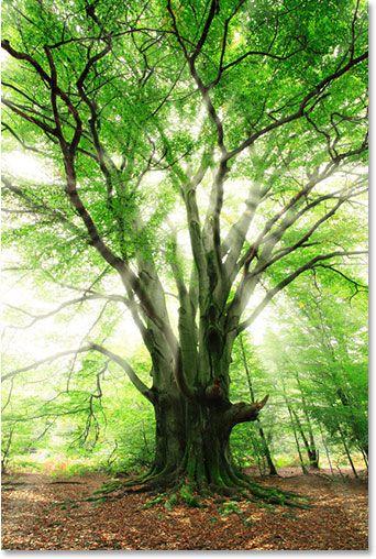 Adding Sunlight Through Trees - Photoshop Tutorial