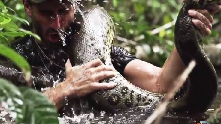 Discovery Channel is promising to go where reality television has never gone before – inside the mouth of an anaconda.