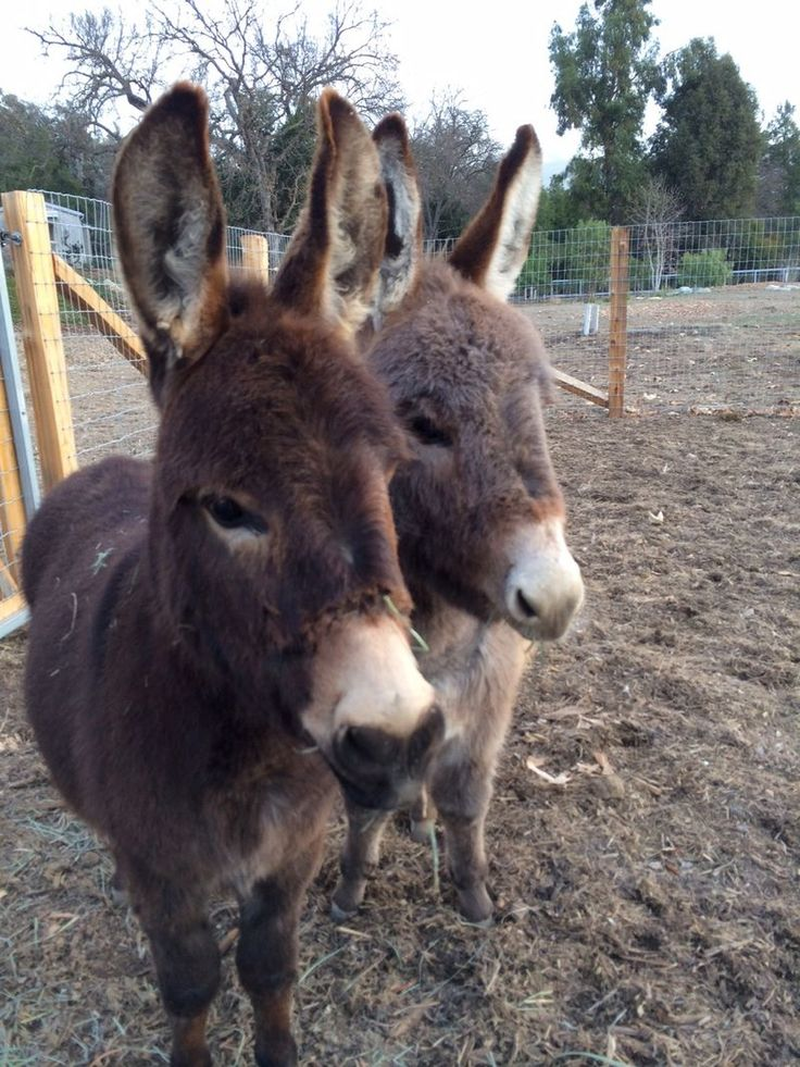 158 Best Animal Kingdom Images On Pinterest Animals