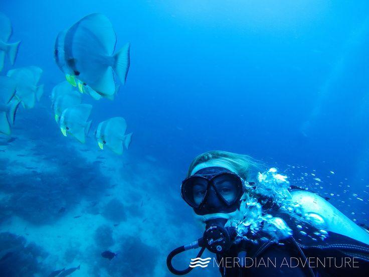 Exploring The Deep Meridianadventuresdive Madive Indonesia Rajaampat Dive Resort Marina Resort Diving