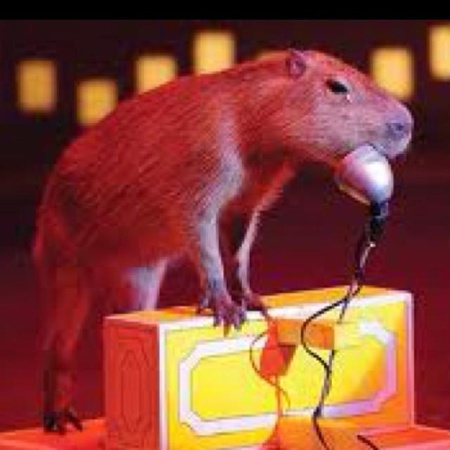 But seriously folks, I'll be here all week.: Capybara Divas, Capybara Portfolio, Heart Capybara