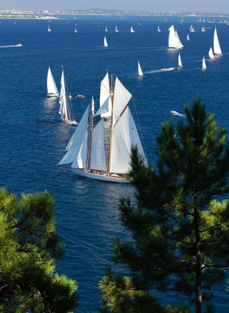 A sea of sails.                                                                 …
