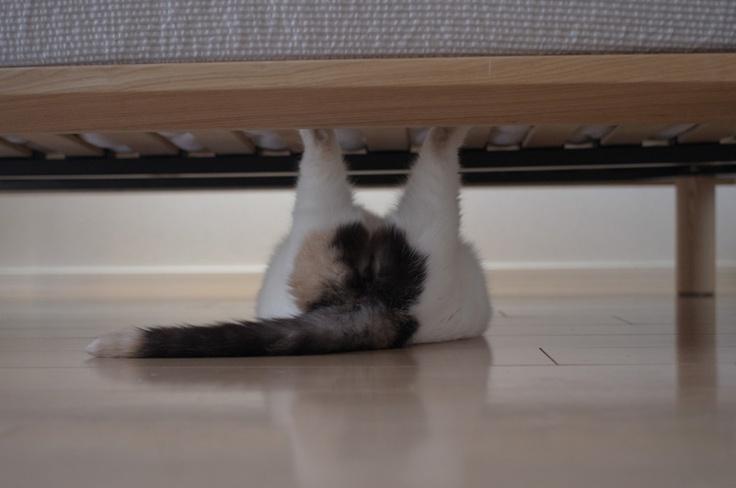Cat (guremike)