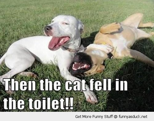 laughing dogs grass rolling cat fell in toilet animal funny pics pictures pic picture image photo images photos lol