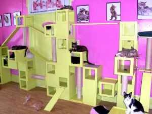 i want this so bad for my cats maybe my head would no longer be - Cat Jungle Gym