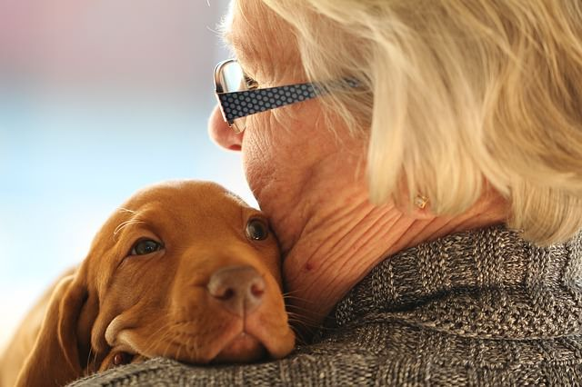 Not only do senior citizens tend to have more time and attention to devote to the care of their pets; those who own a dog have been shown to have lower blood pressure, increased social interactions and healthier exercise habits. Several …
