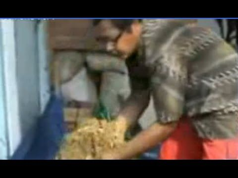 Beternak Kambing, budidaya kambing pakan sendiri. membuat pakan kambing sebenarnya sangat mudah apalagi bila kita meracik pakannya sendiri. Ternak kambing sa..