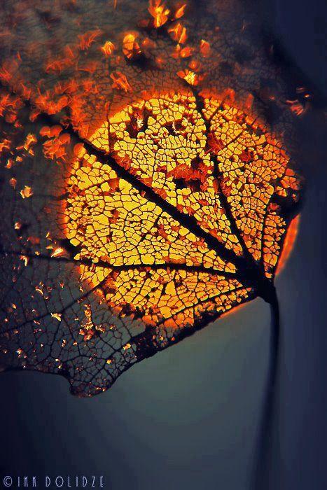 sun-rising-behind-a-leaf