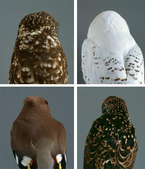 : Fauna, Owl Feathers, Cultureclub Birds, Audreycorregan, Feathers Sticks, Crochet Patterns, Natural, Animal, Owl Patterns