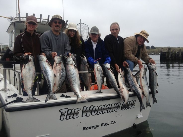 Bays trips and charter boat on pinterest for Bodega bay fishing reports