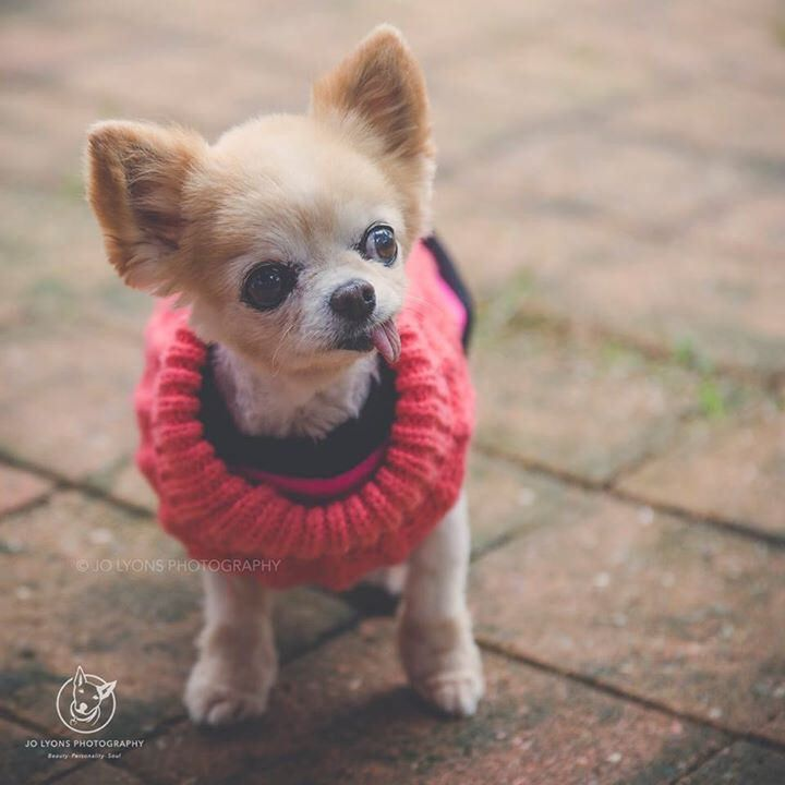 """Here's a little """"Paws for Thought"""" Rescue delight for your Wednesday night. Teeny Weeny <3"""