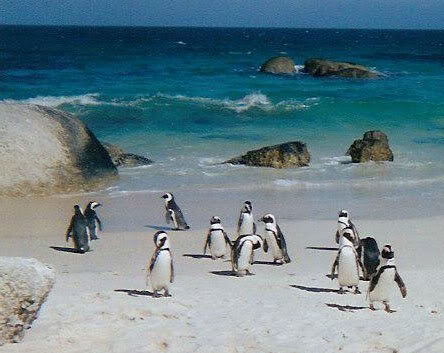 LOVE Simon's Town, South Africa