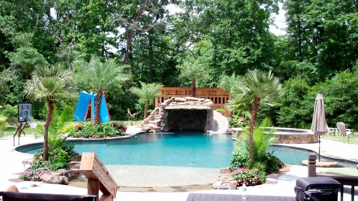 17 Best Images About Austin Texas Palm Trees 936 524 3889