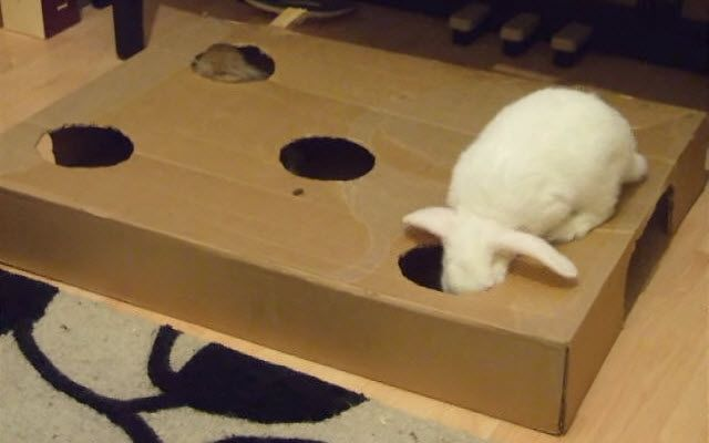 DIY Box Bunny Burrow - PetDIYs.com