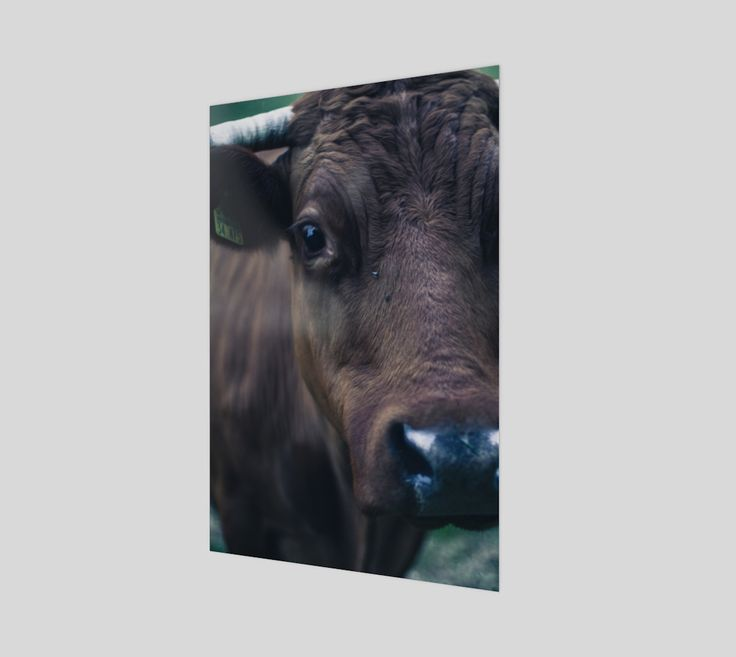 "Poster+""Cow""+by+Mixed+Imagery"