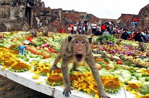 Monkey buffet festival in Thailand! Of course the table is set for the monkey!