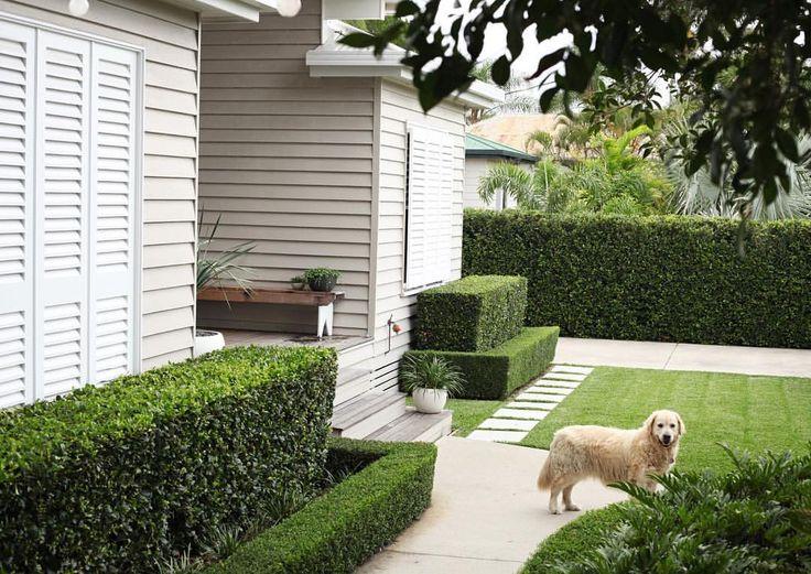 hedge along driveway