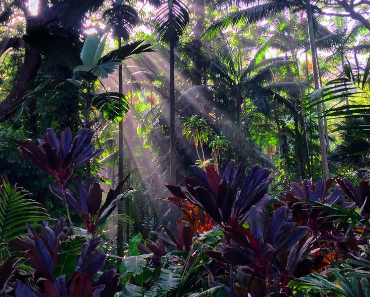 Rainforest  Photo by Sheli D. - 2016 National Geographic Travel Photographer of the Year