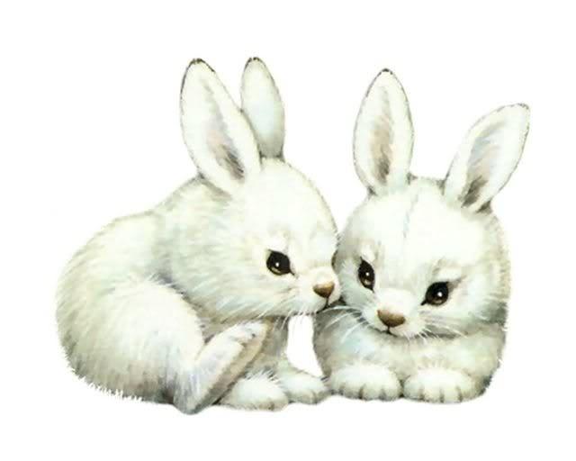 white baby bunnies