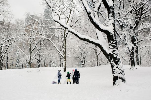 Snow In Central Park by Dina Litovsky