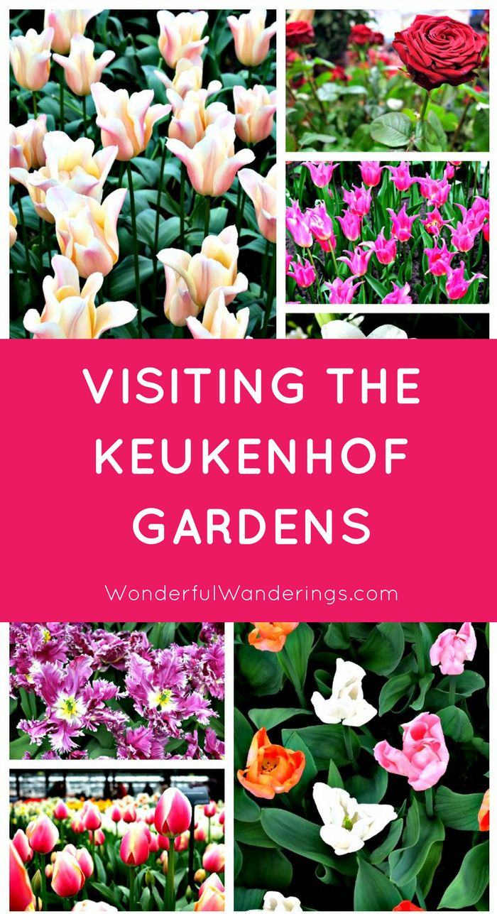 Map Germany Netherlands%0A Keukenhof Gardens in Lisse  the Netherlands seen from the ground  u     sky