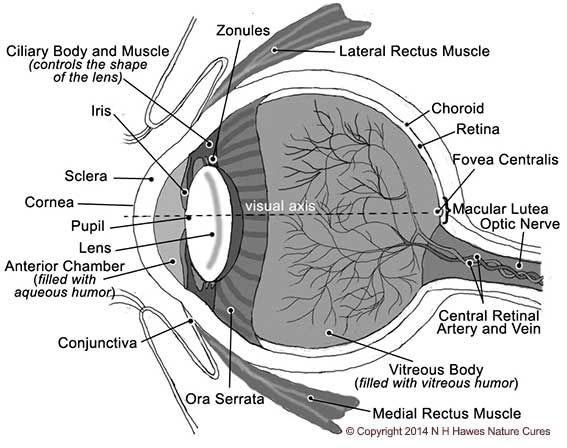 Eye diagram Nat H Hawes Nature Cures