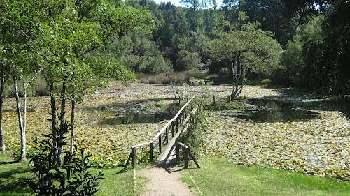 Laguna de los Lotos ubicada en el Parque Saval en la Isla Teja de la ciudad de Valdivia.    KEYS: #chile #valdivia #saval #lotos #turismo #turichile