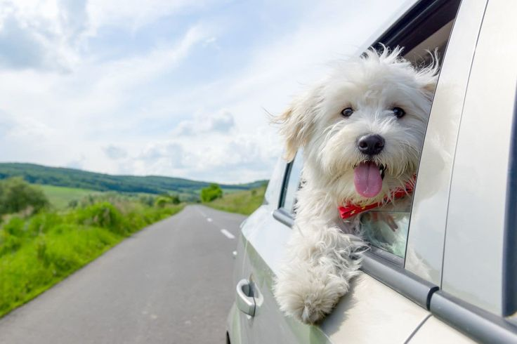 Why do we love pets? An expert explains.