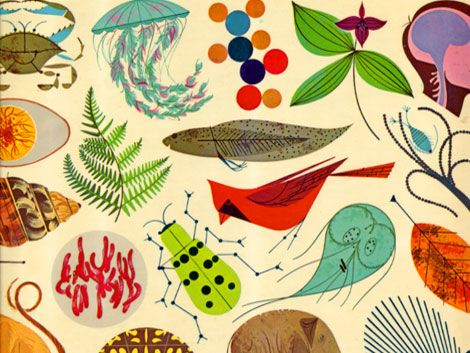 Illustration by Charley Harper for the Giant Golden Book of Biology (out of print, seen on grainedit.com)