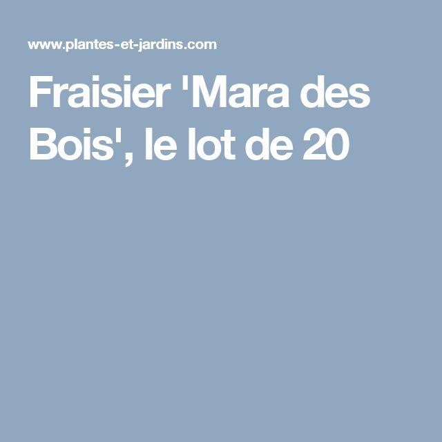 Fraisier 'Mara des Bois', le lot de 20
